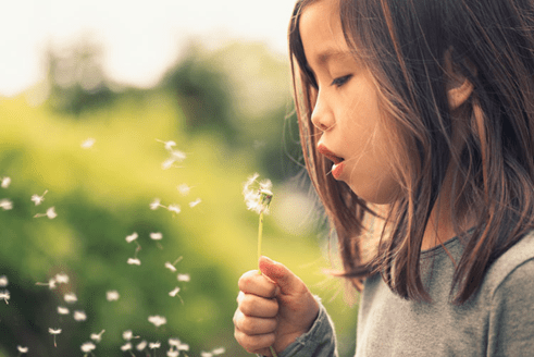 Young kid blowing a dandelion